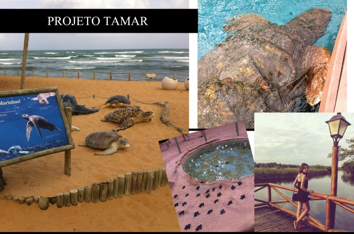 Projeto Tamar por Mean Fashion